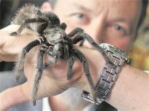 паук на руке