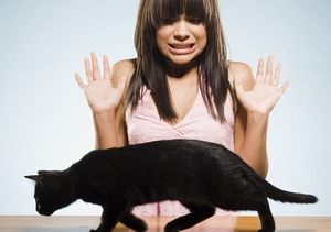 боязнь черной кошки