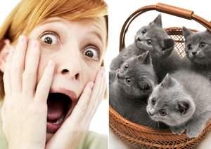 испуг женщины и корзина с котами
