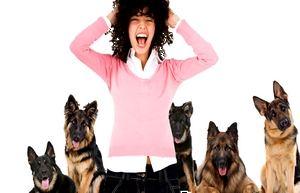 страх собак