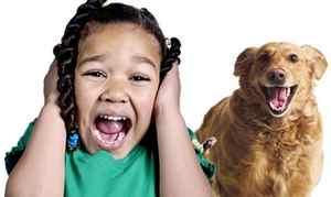 боязнь собаки