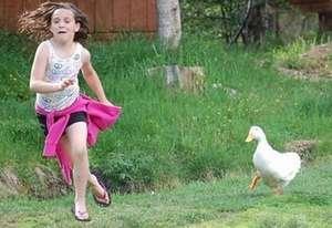 боязнь гусей