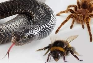 змея, паук