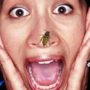 боязнь ос и пчел