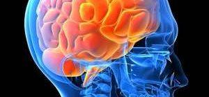 головной мозг в голове